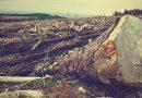 Stop Deforestasi!